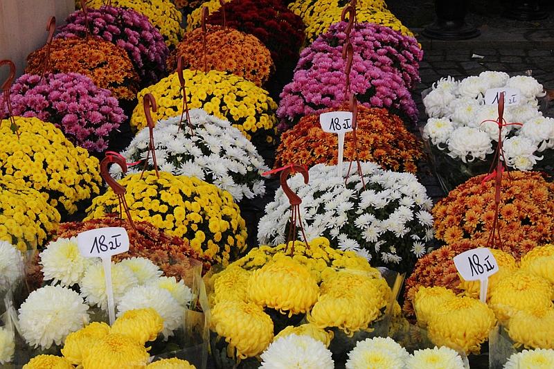 Kwiaty Na Grob Jakie Kwiaty Kupic Na Cmentarz Na Co Zwrocic Uwage