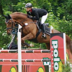 Skoki i egzaminy na odznaki jeździeckie
