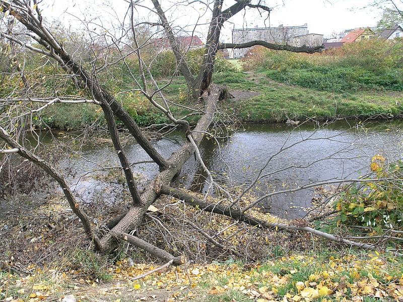 Koryto rzeki znów zatarasowane