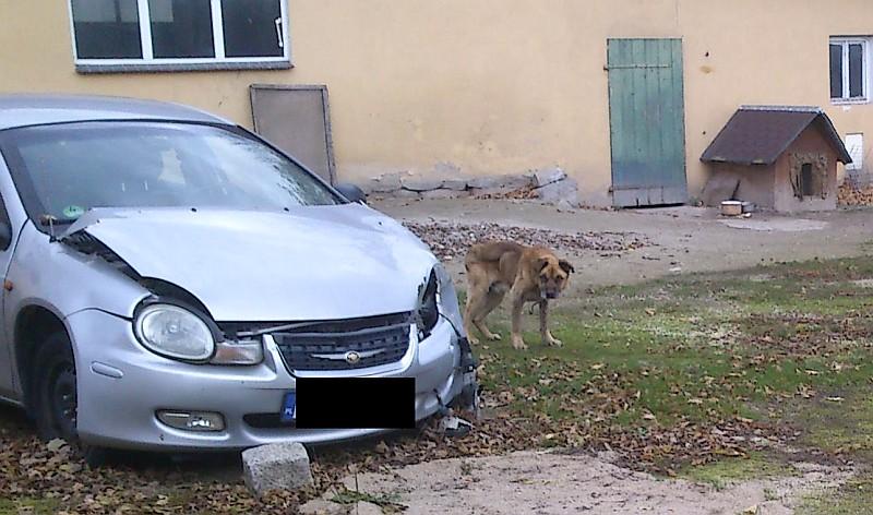 pies Silisławice 1
