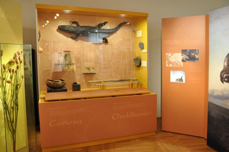 wystawa 12 Senckenberg