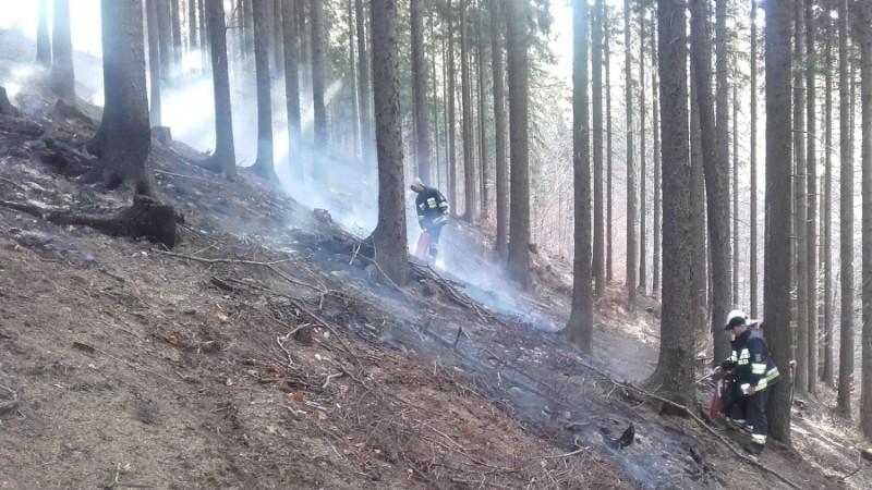 pożar las