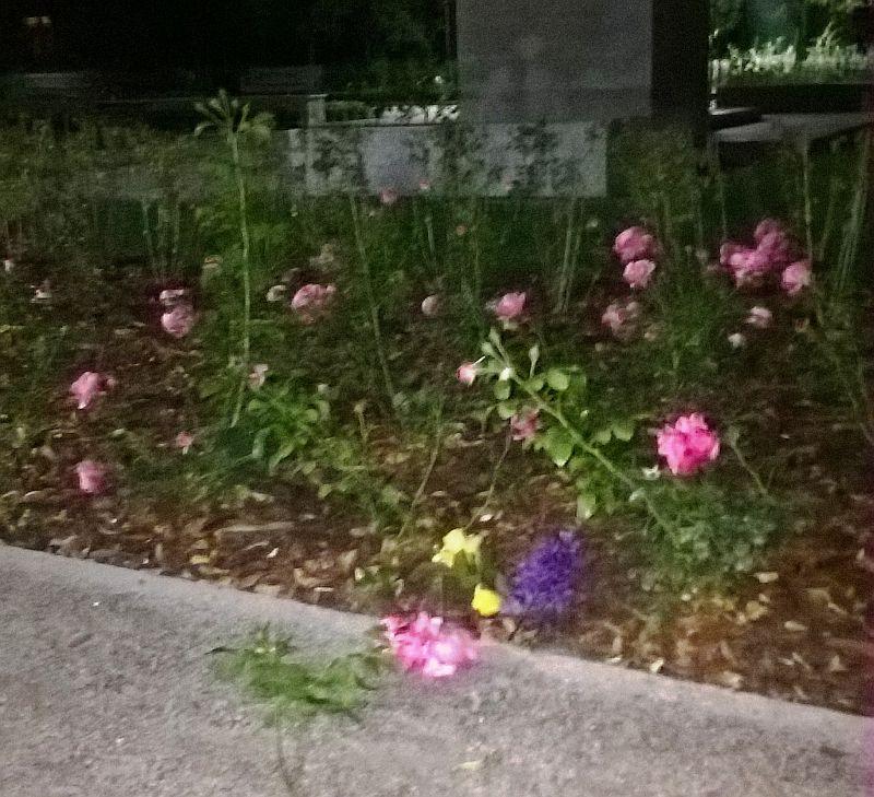 ogród zniszczony (1)