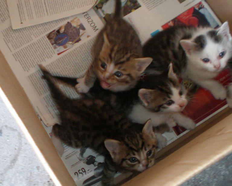 Podrzucone kociaki do wzięcia