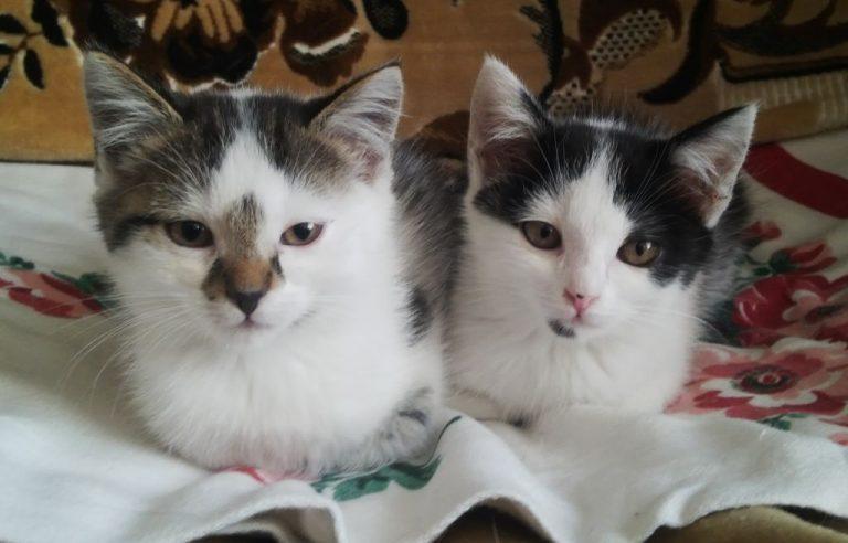 Koci bracia czekają na dom