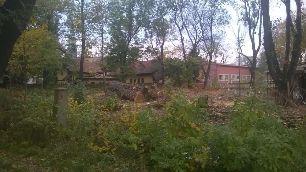 drzewo-ul-lipowa