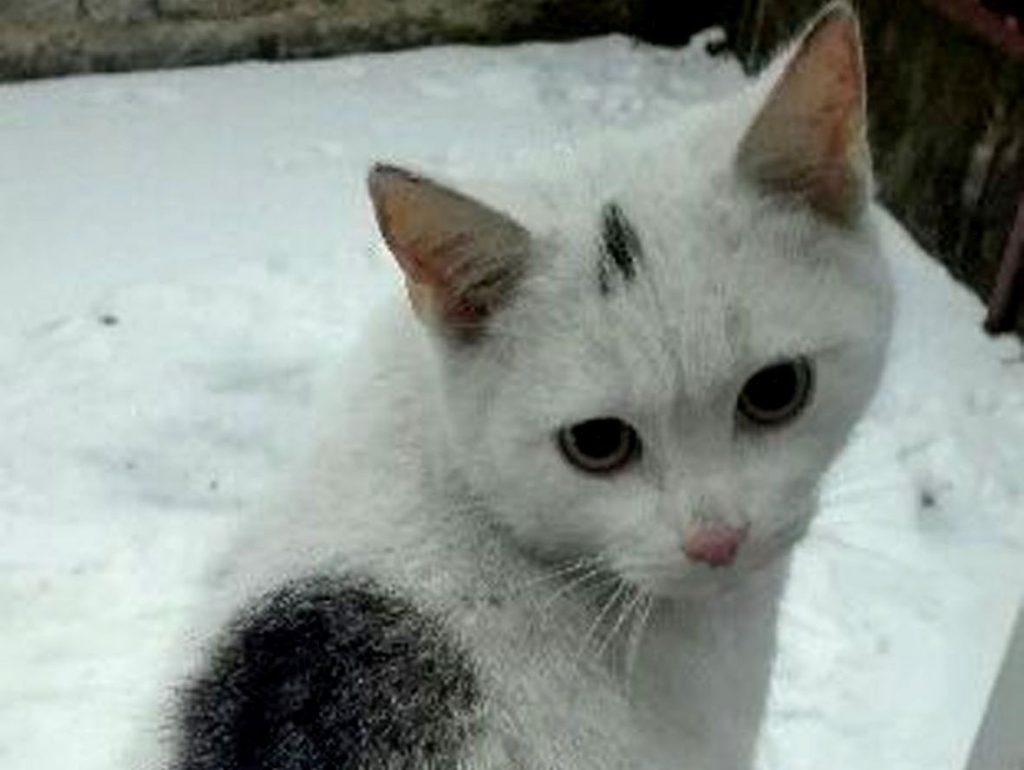 Śnieżek 11