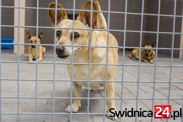 Przez trzy lata pomogli setkom zwierzaków. Świdnickie schronisko zachęca do adopcji i przekazania 1%