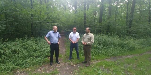 Jaworzyna Śląska ma pomysł na las
