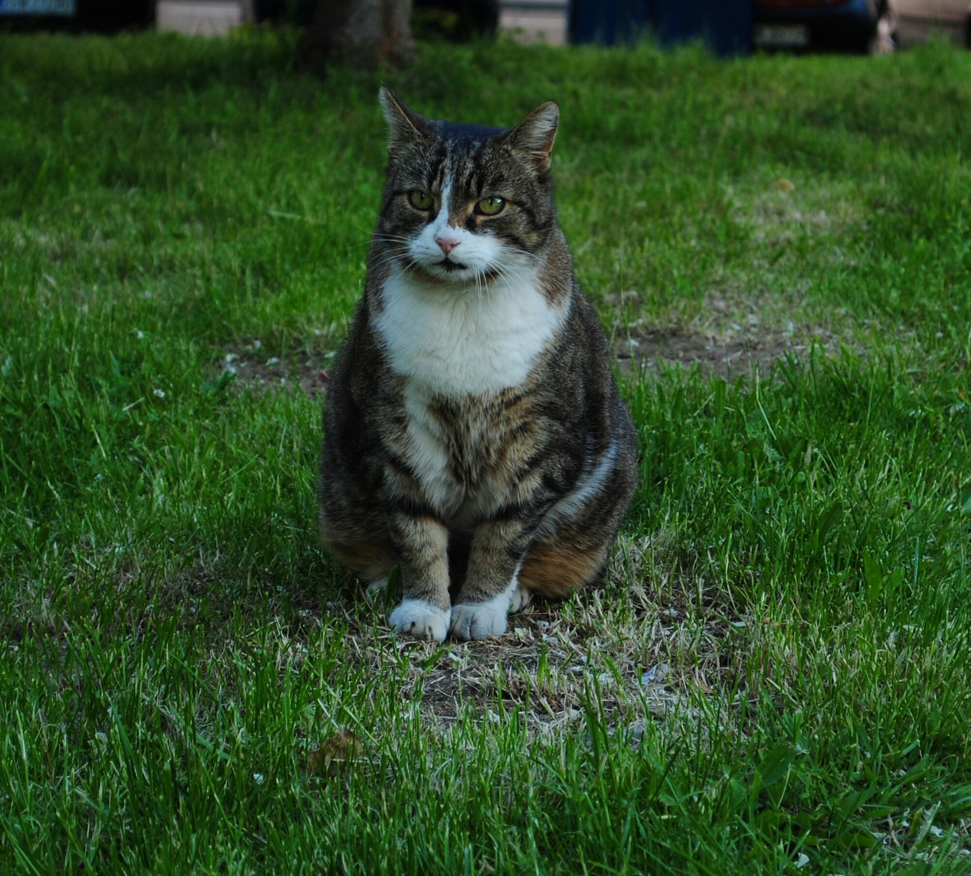 Zaginął Kot Foto Swidnica24pl Wydarzenia Informacje