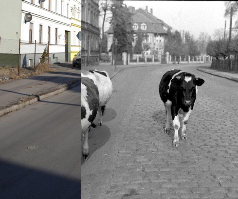 Świdnica wczoraj i dziś. Ul. Kliczkowska
