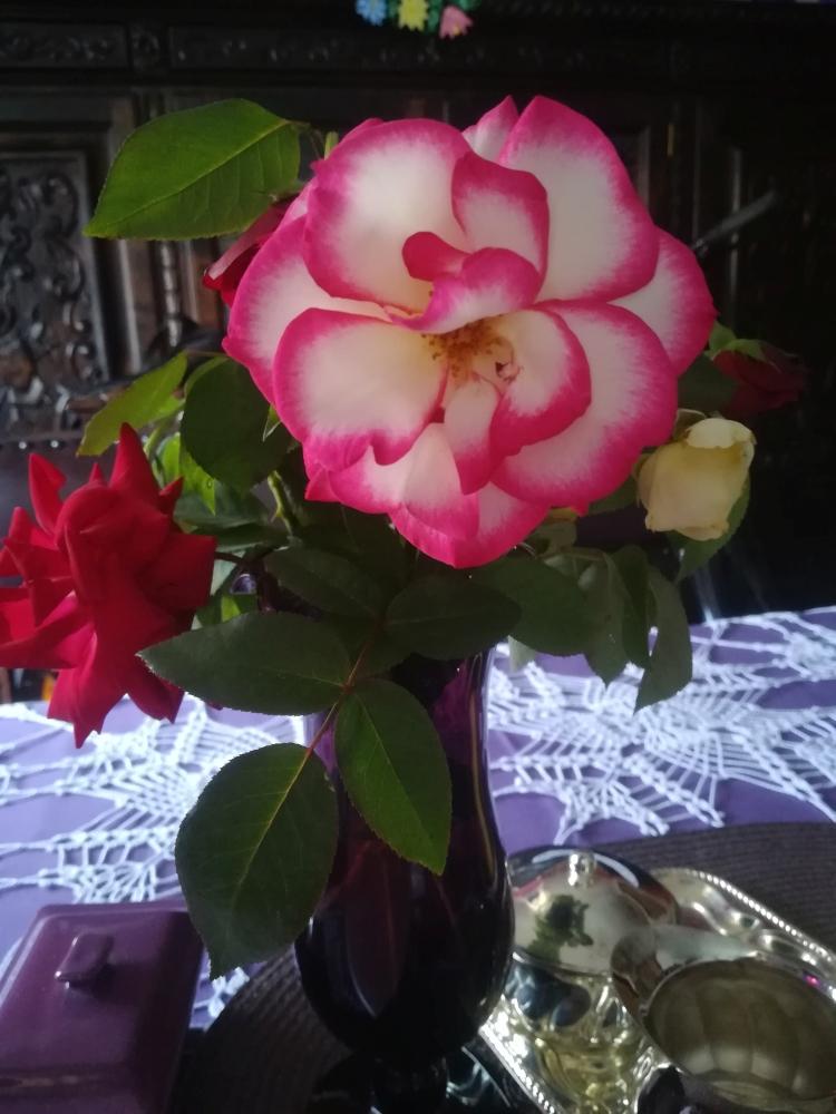 Róża z ogrodu ROD Relax w Świdnicy, fot. Violetta Ostrowska