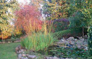Jesienne barwy w ogrodach działkowych, fot. Violetta Ostrowska