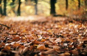 Kolory jesieni, fot. Mariusz Kot