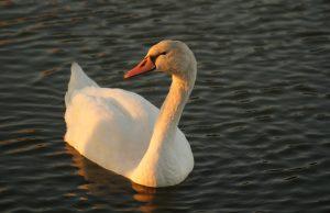 Nad zalewem w Świdnicy, zdjęcie Sandra Skierś