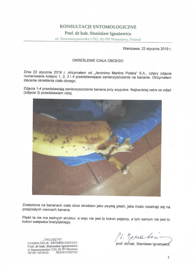 Banan Z Kokonem Pająka Swidnica24pl Wydarzenia Informacje