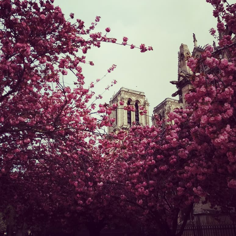 Katedra Notre Dame 16.04.2018, fot. Maciej Broński