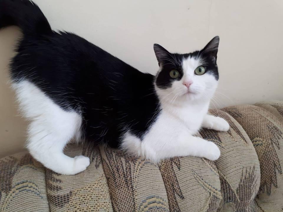 Ogromny Przymilna kotka czeka na dom - Swidnica24.pl - wydarzenia XA91