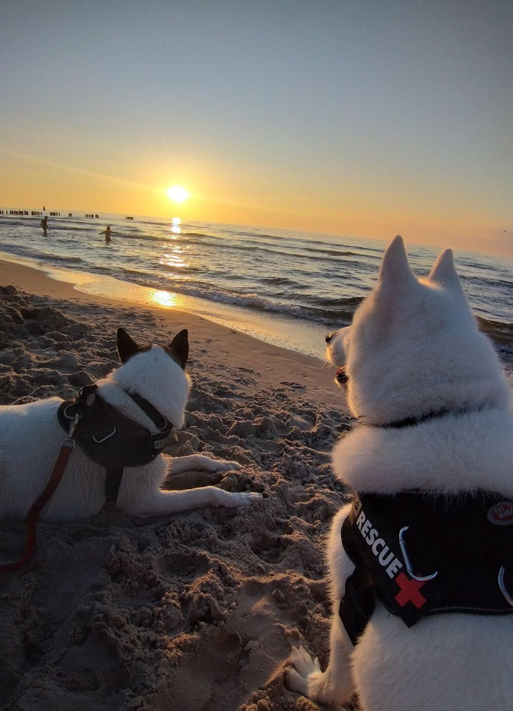 Plaża w Dźwirzynie, fot. Tomasz Zerka