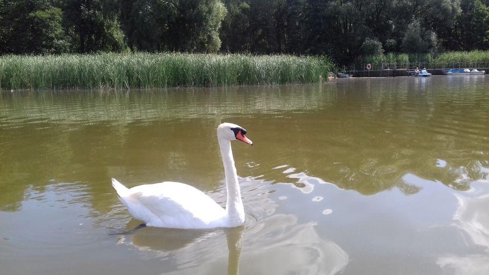 Nad jeziorem Olejnickim w Olejnicy, fot. Elwira Kinast