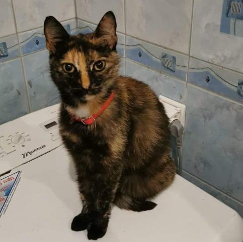 Czyj kot z czerwoną obrożą? [Aktualizacja]