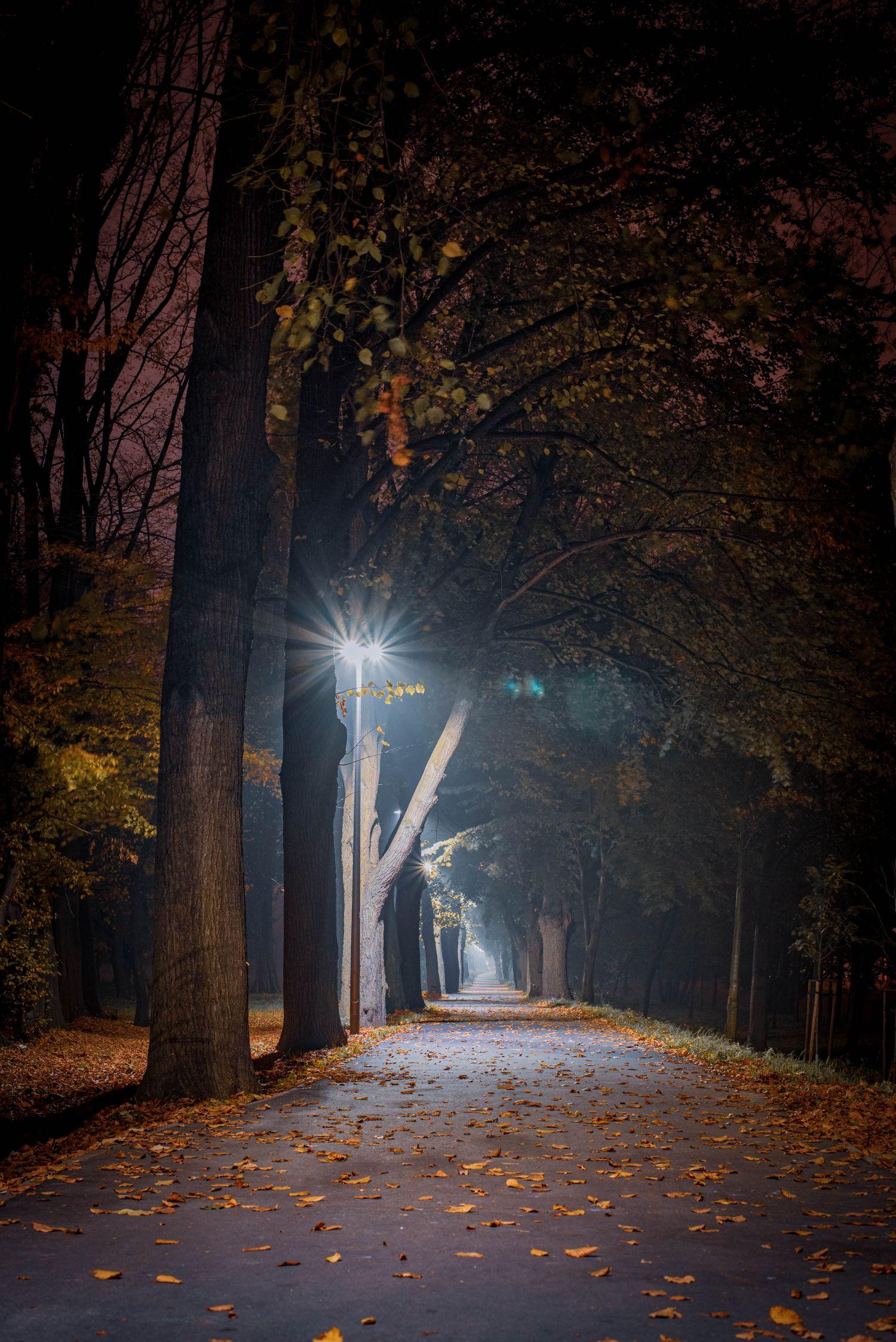 Świdnica, na ścieżce wzdłuż rzeki Bystrzyca, 23 październik 2019, fot.Grzegorz Fąfara