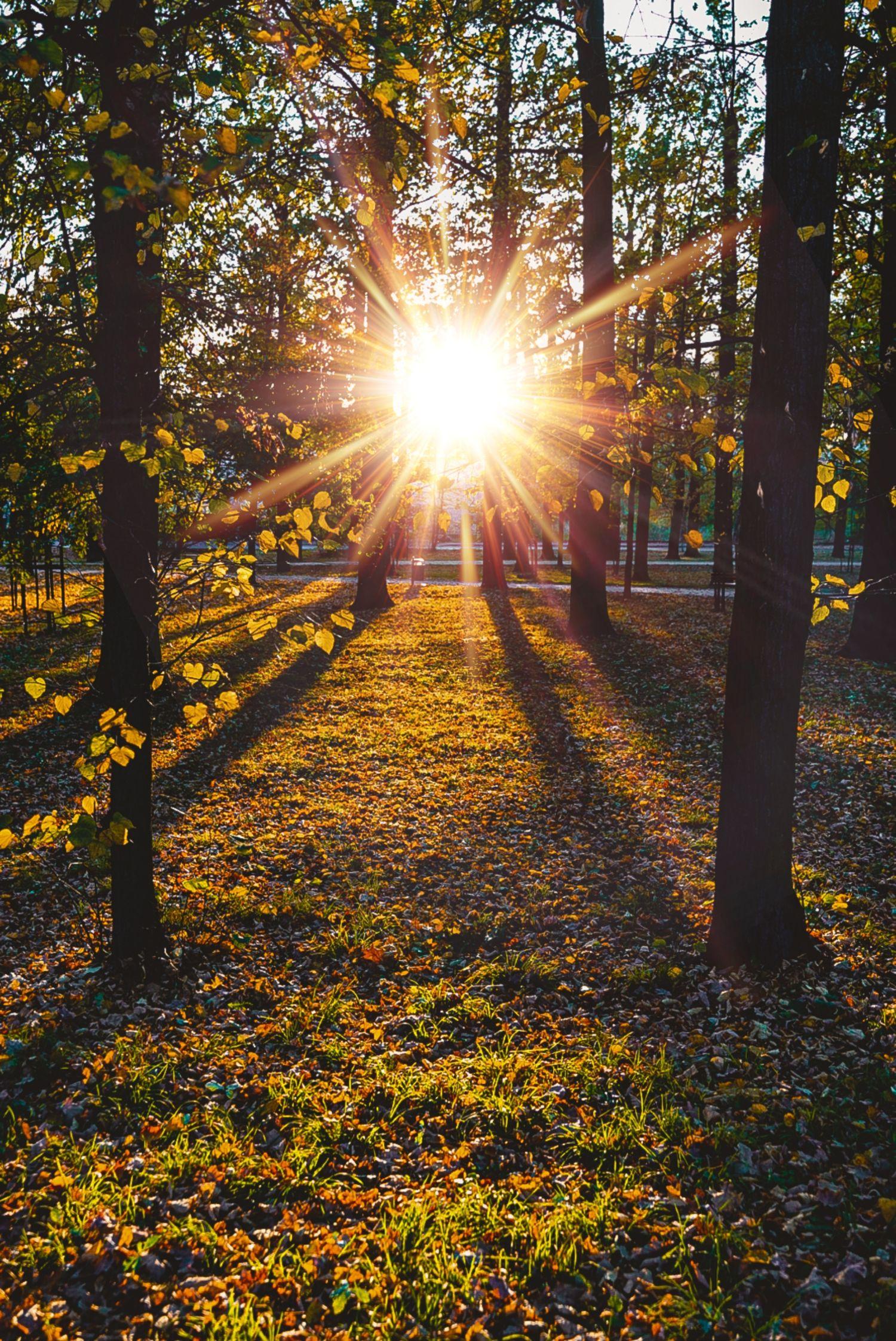 Świdnica, parku przy ul. Pionierów, 20 październik 2019, fot. Estera Bednarek-Tomaszewska