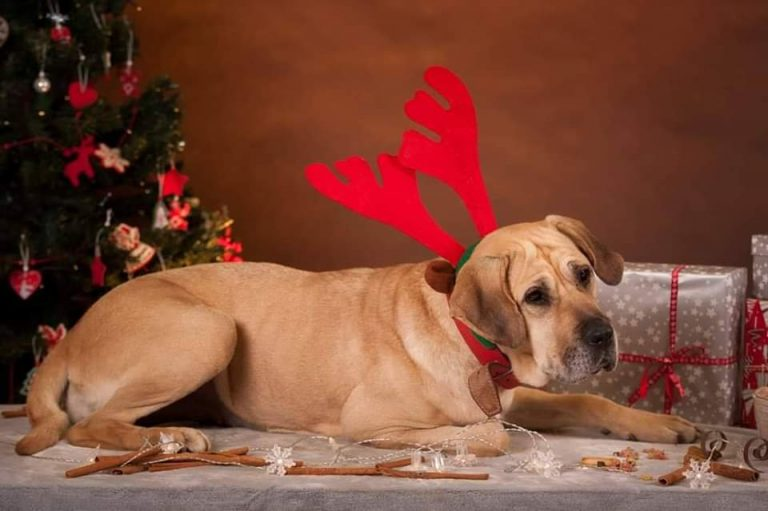 Kiermasz świąteczny dla świdnickich bezdomniaków