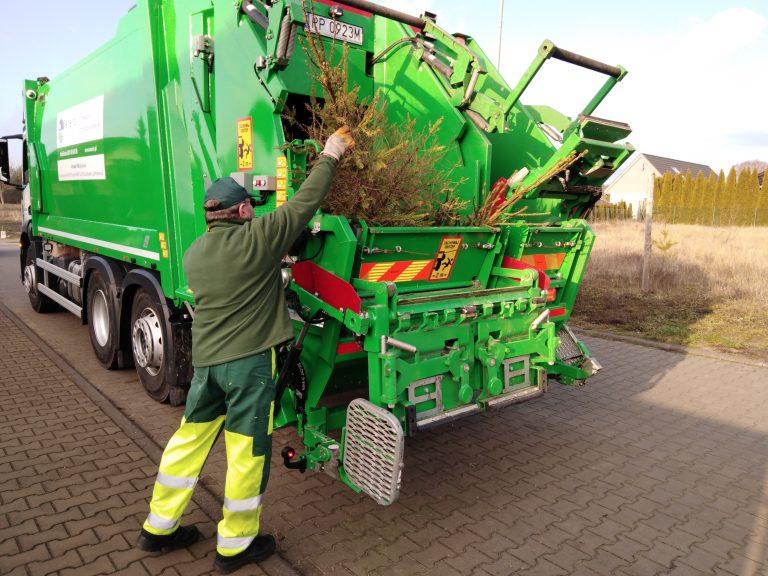 W Świdnicy i gminie Strzegom zabiorą świąteczne drzewka