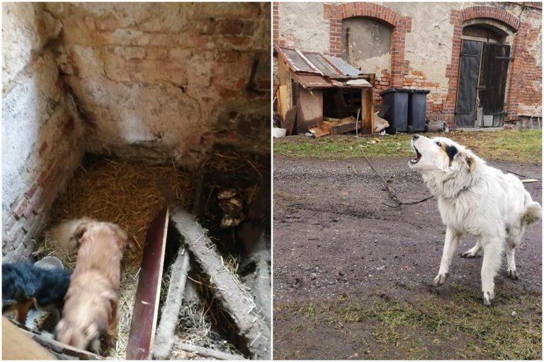 """Bez wody i jedzenia, żyły w szopie i """"czymś przypominającym budę"""". Czworonogi zostały uratowane przez społeczników [FOTO]"""