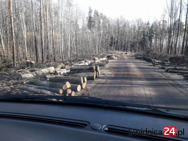 """Trwa remont kolejnego odcinka """"modliszówki"""". Na razie pod topór poszły drzewa [FOTO/VIDEO]"""
