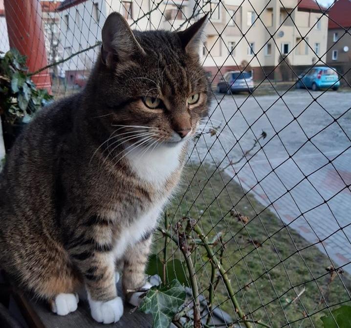 Zaginął kot Tadek