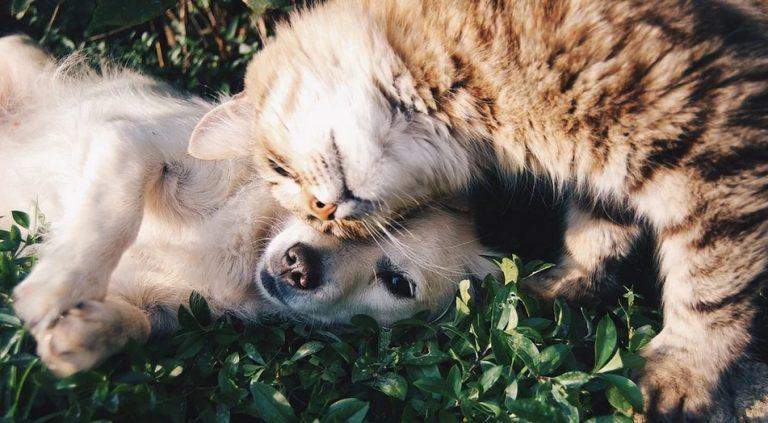 Lekarz radzi: Zwierzęta domowe w obliczu epidemii koronawirusa