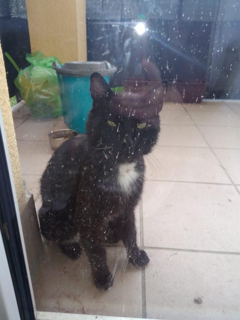 Zabłąkany kot w Komorowie