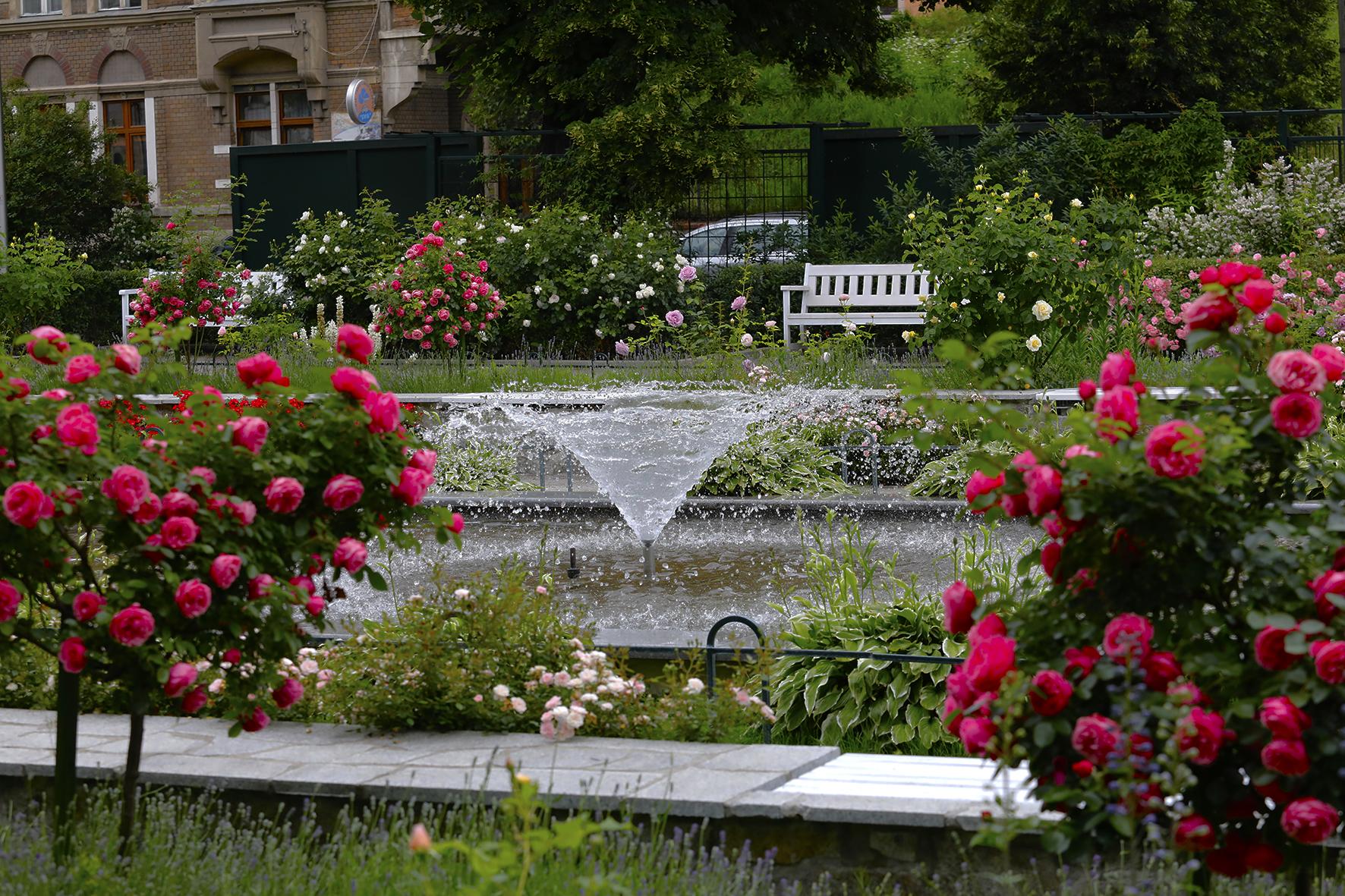 Ogród różany w Świdnicy, fot. Dariusz Nowaczyński