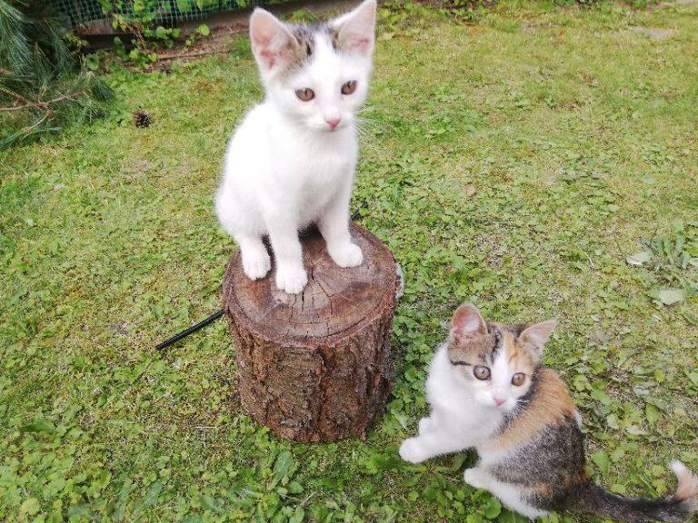 Zostały podrzucone do działkowej altanki. Kociaki szukają nowego domu