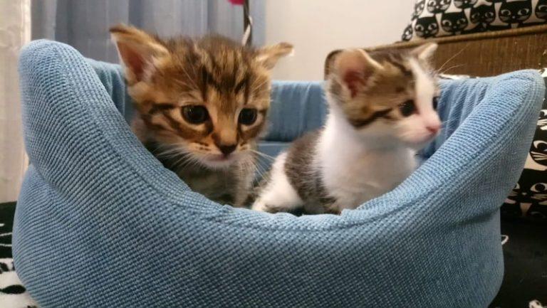 Fruzia i Tofik urodziły się w stercie opon. Kocia rodzina szuka nowego domu