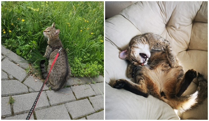 Oddają kotkę z adopcji. Kto da jej dom?