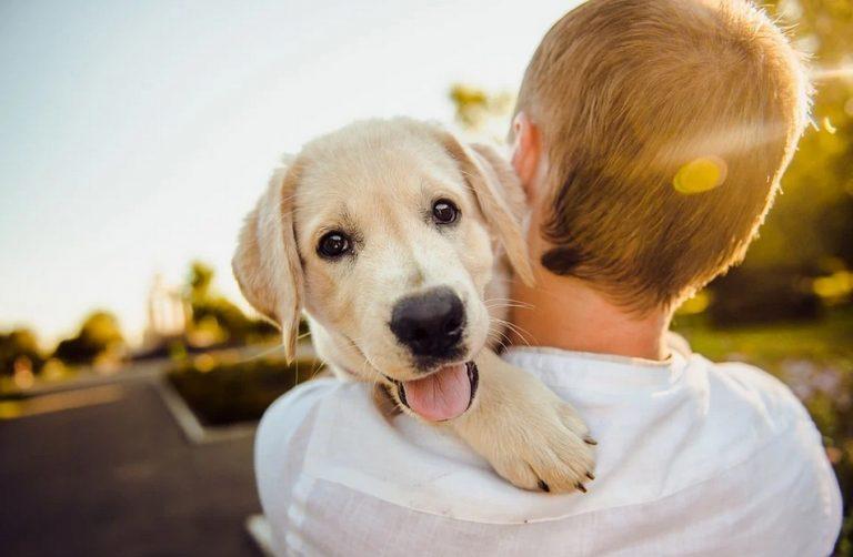 Lekarz radzi: Zwierzaki w upał