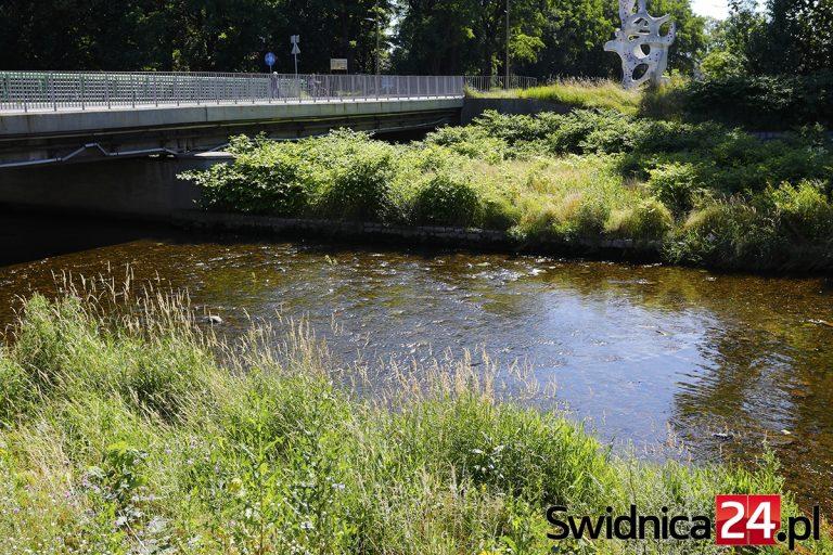 Ile będzie kosztowało utrzymanie nabrzeży rzek w Świdnicy? Miasto wyłoniło wykonawcę