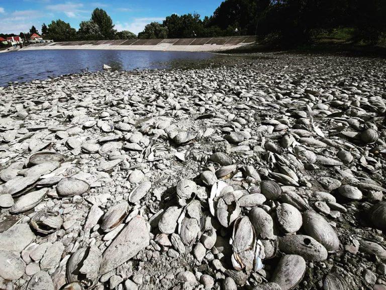 Trwa śledztwo w sprawie katastrofy ekologicznej na zalewie Witoszówka. Prokuratura dysponuje już jedną z istotnych opinii