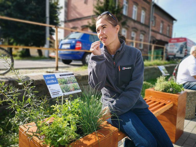 Miejska ławka z ziołami. Każdy może się poczęstować!