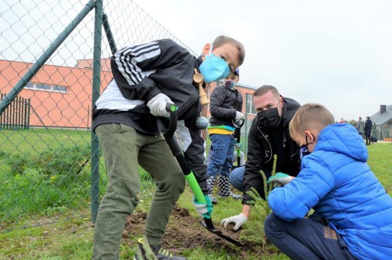 W gminie Żarów posadzą 600 drzew
