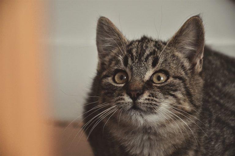 Pilnie potrzebne domy i karma dla pięciu kociaków [Aktualizacja]