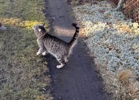 Czyja kotka?