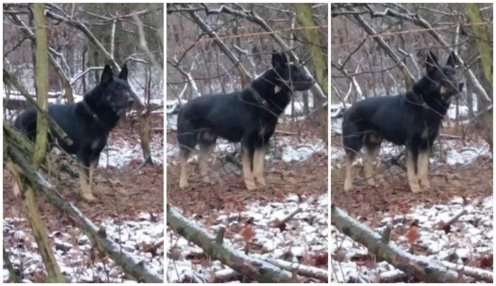 Przywiązał psa do drzewa w lesie, obrożę spiął trytką