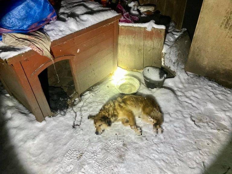 Zamarzł uwiązany do budy, pozostałe zwierzęta uratowane w ostatniej chwili