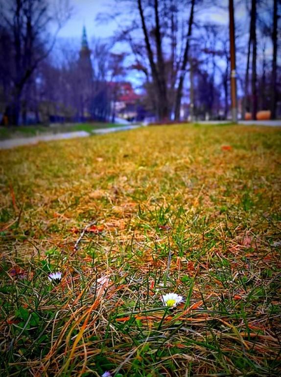 Park Centralny z widokiem na Katedrę, Świdnica, 17.03.2021, fot. Jarosław Zembek (1)