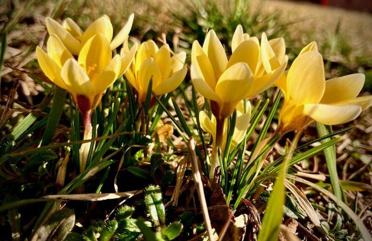 Pierwsze oznaki wiosny na fotografiach [ROZWIĄZANIE KONKURSU]