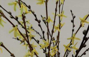 wiosenna kompozycja, 19.03.2021 w Domanicach, fot. Agnieszka Tomczyk